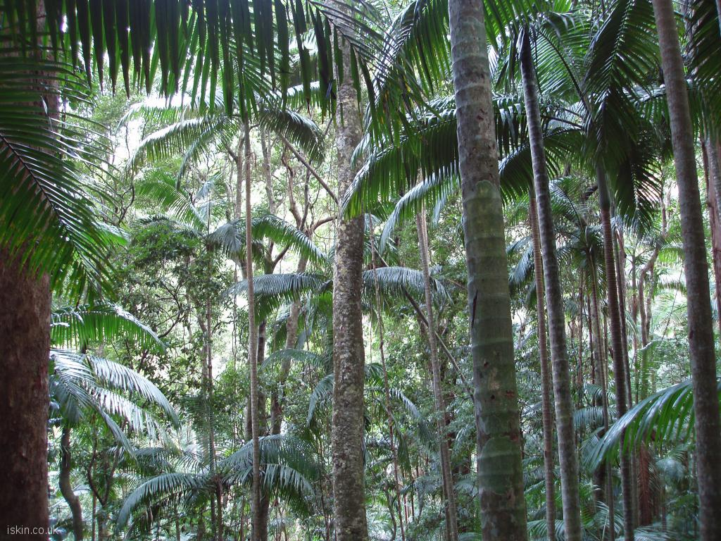 desktop image Tropical Vegetation