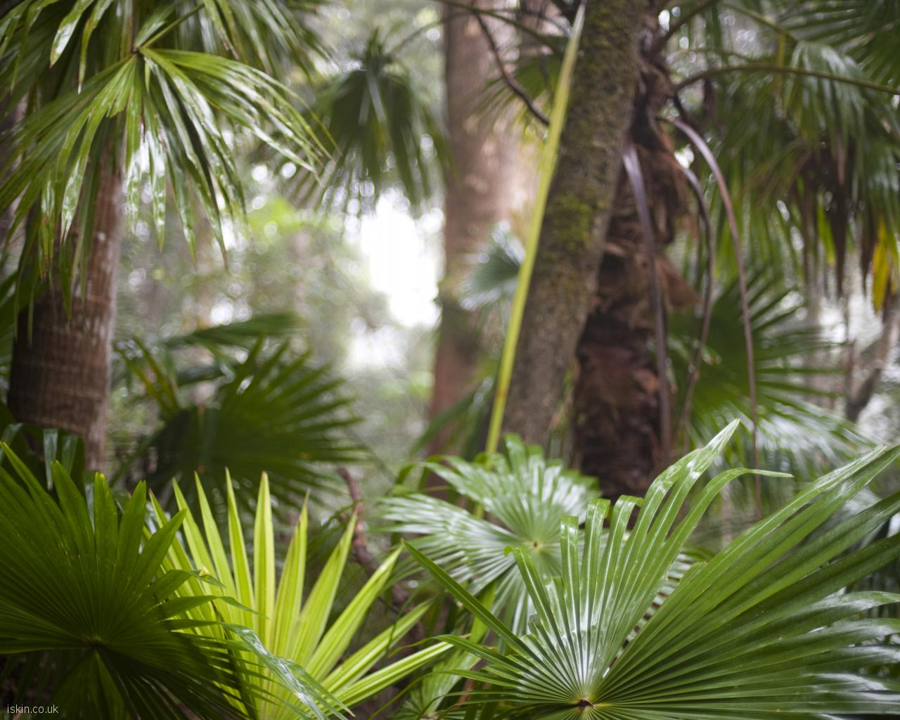 desktop image tropical rainforest