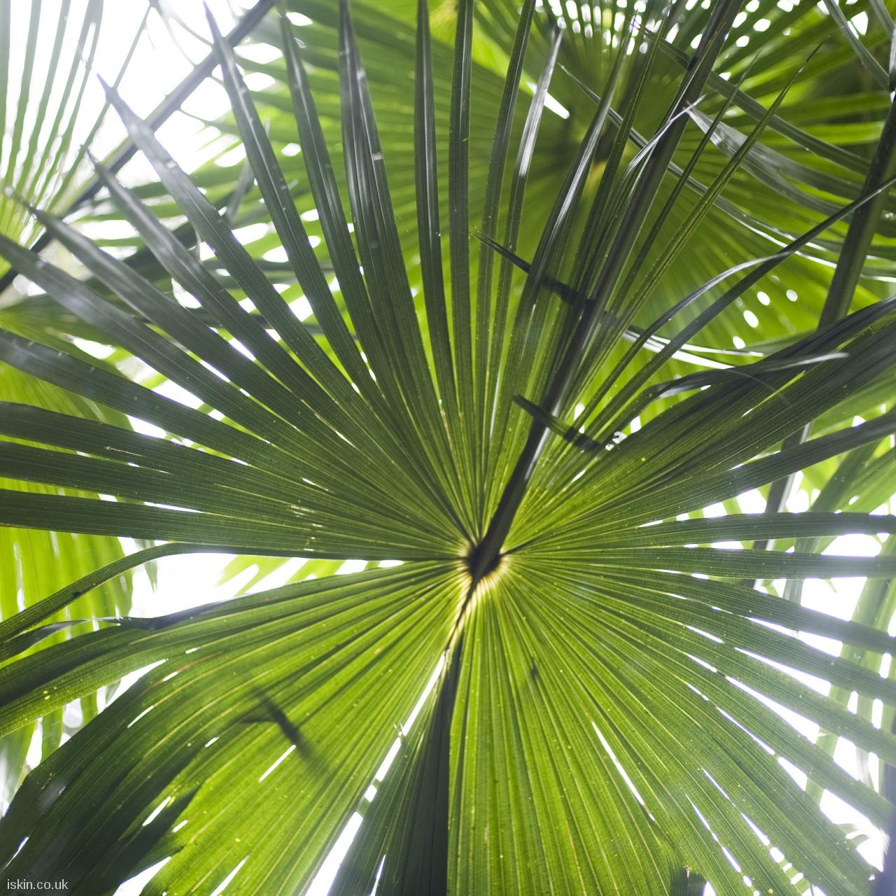 android table squarerainforest palms