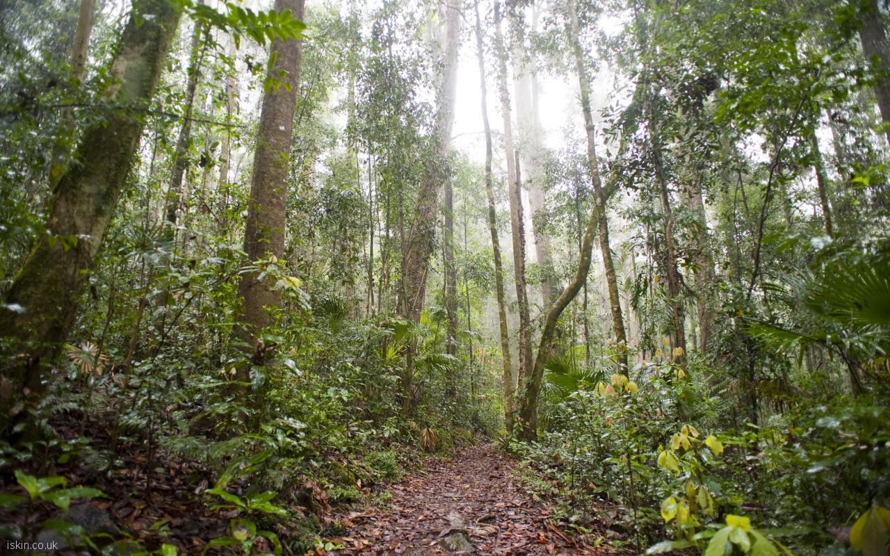 desktop image rainforest footpath