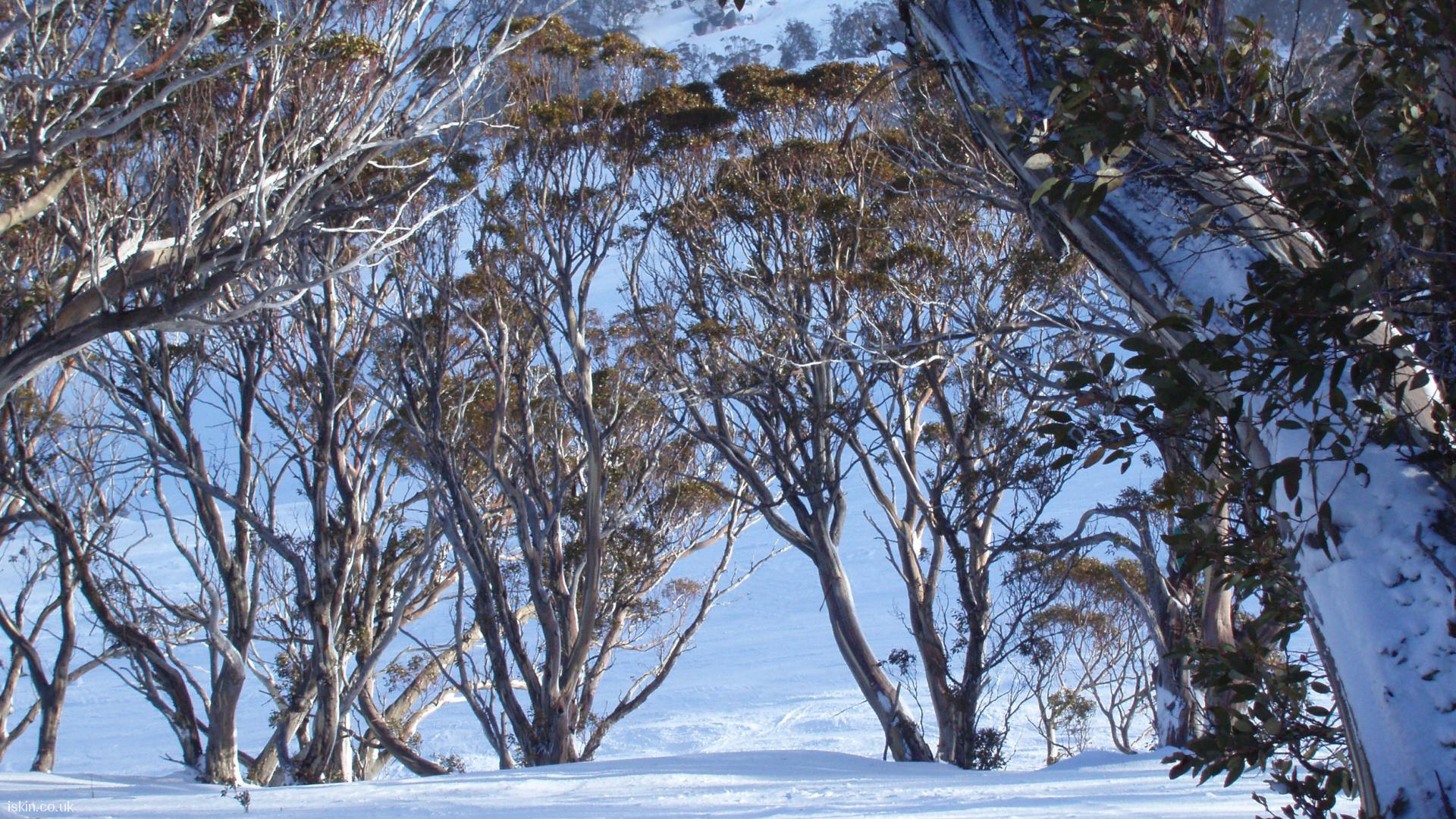 desktop image Snow Gums