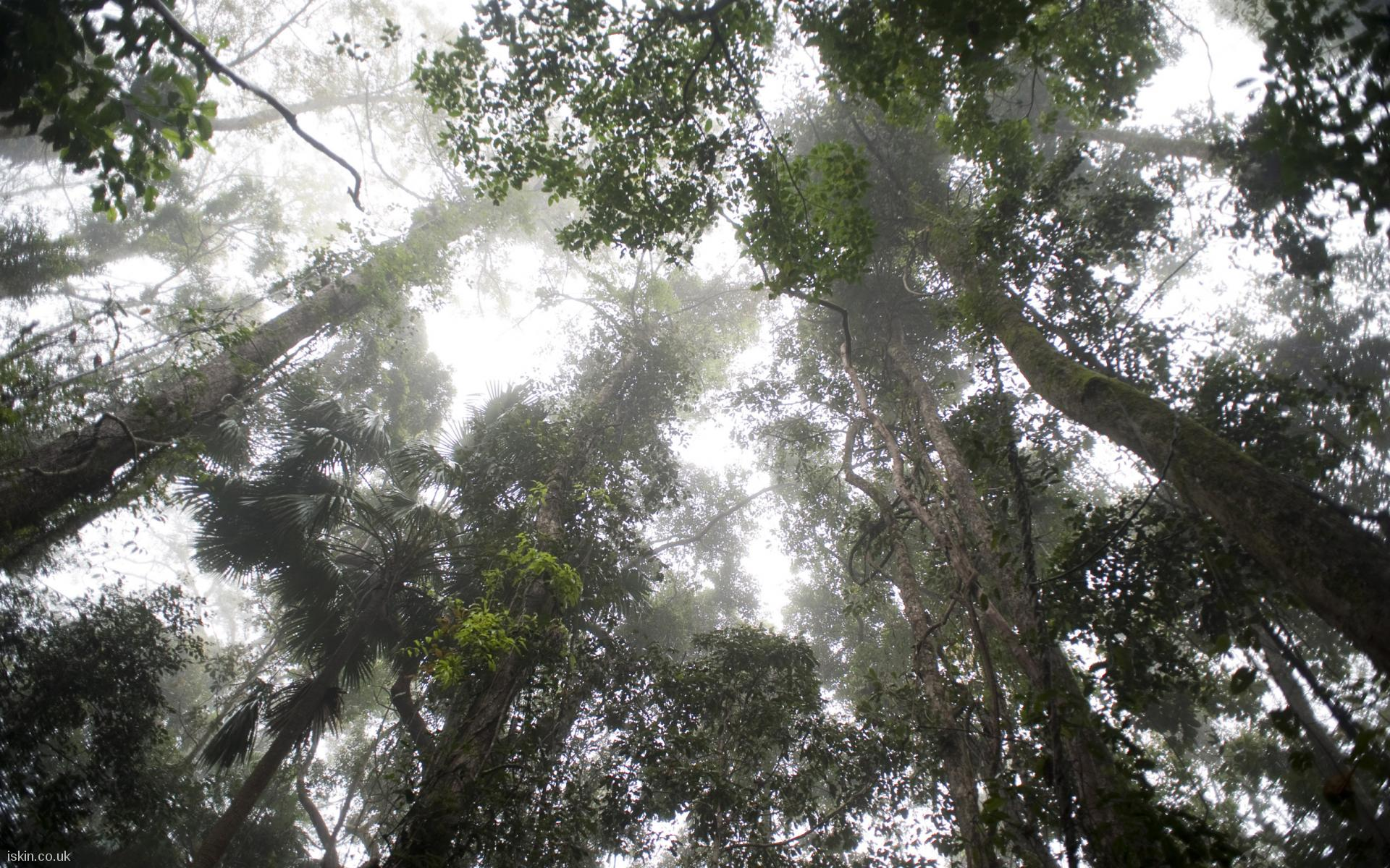 desktop image rainforest canopy