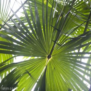 desktop image rainforest palms