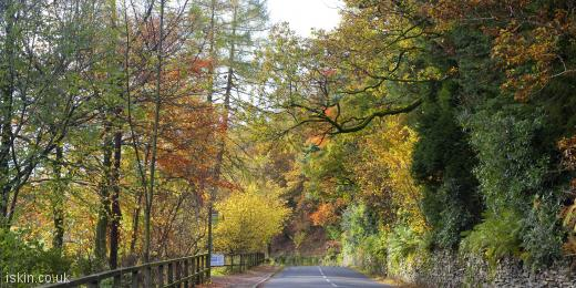 twitter header autumn country road
