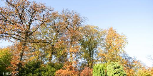 twitter header colorful autumn trees