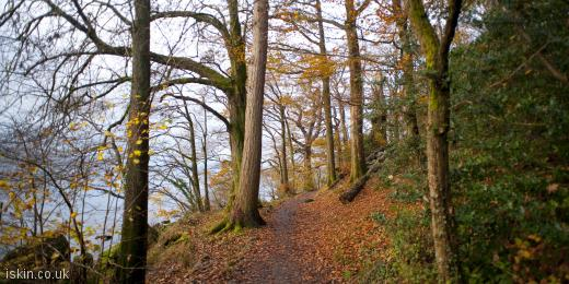 twitter header autumn woodland walk