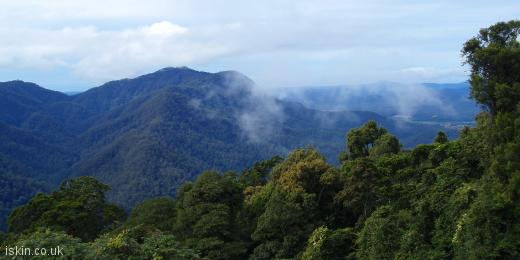 twitter header Dorrigo Rainforest