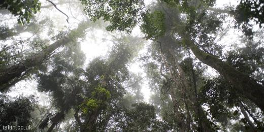 twitter header rainforest canopy