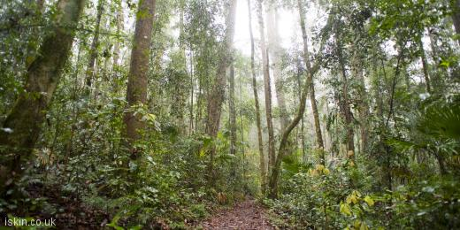 twitter header rainforest footpath