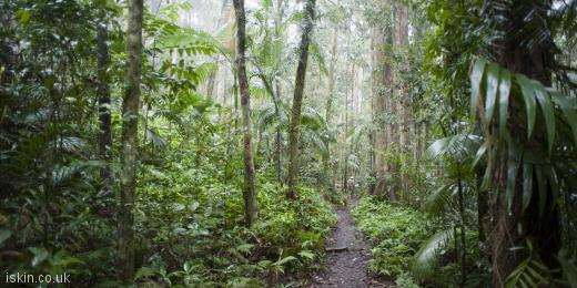 twitter header rainforest trail