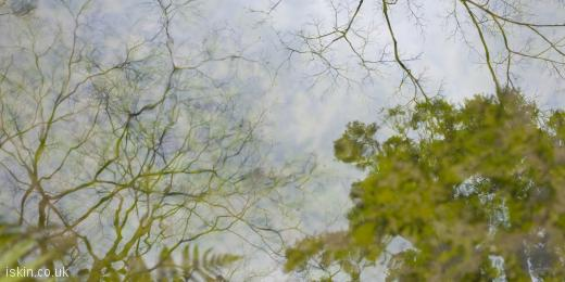twitter header pond reflections