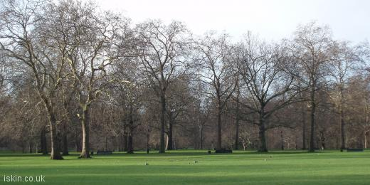 twitter header Trees in the Park