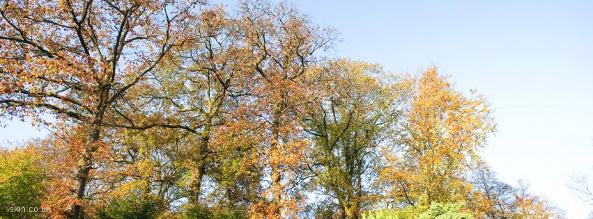 facebook header colorful autumn trees