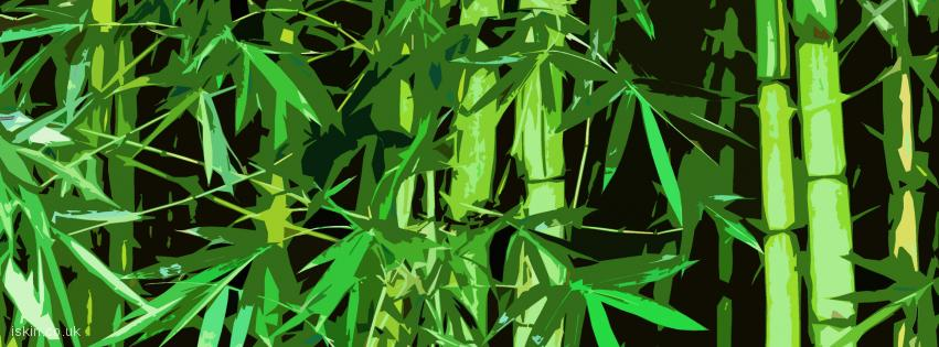 facebook header Bamboo Graphic