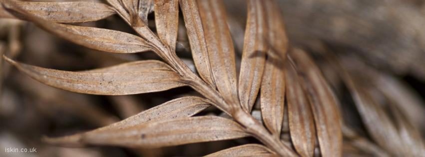 facebook header Brown Leaf