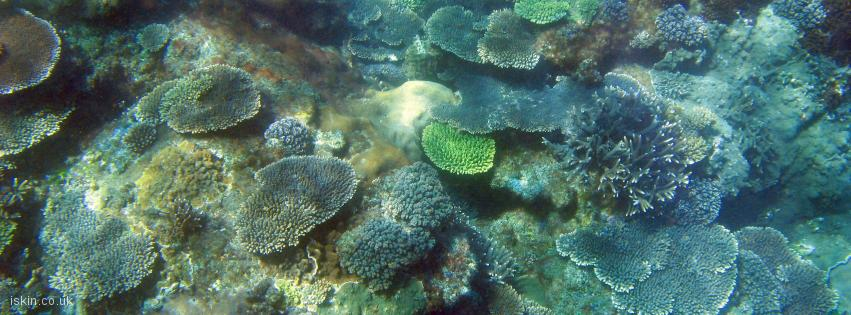 facebook header Colourful Plate Corals