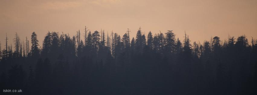 facebook header Dying Trees