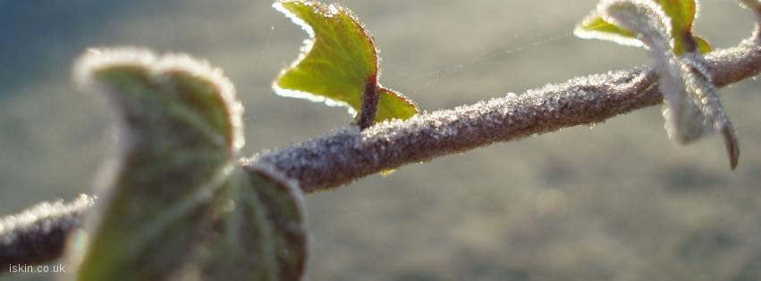 facebook header Frosted Ivy