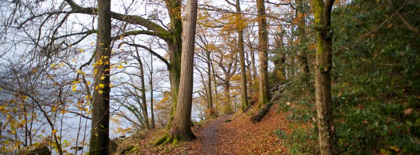 facebook header autumn woodland walk
