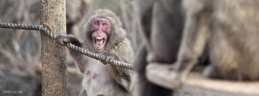 facebook header screaming monkey