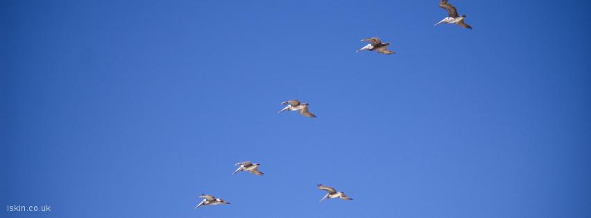 facebook header pelican formation flight