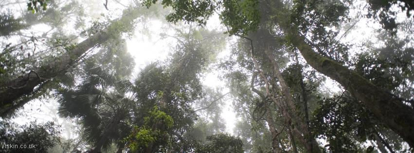 facebook header rainforest canopy