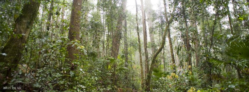 facebook header rainforest footpath
