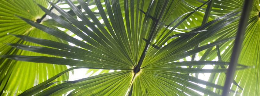 facebook header rainforest palms