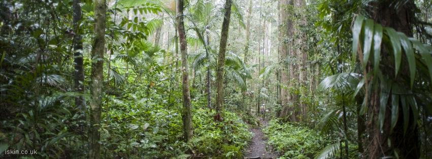 facebook header rainforest trail