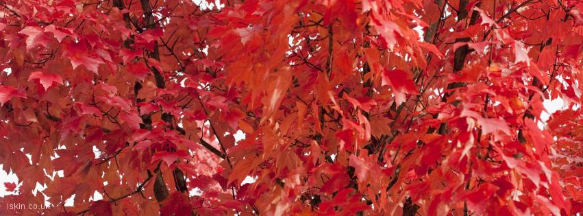 facebook header fiery red leaves