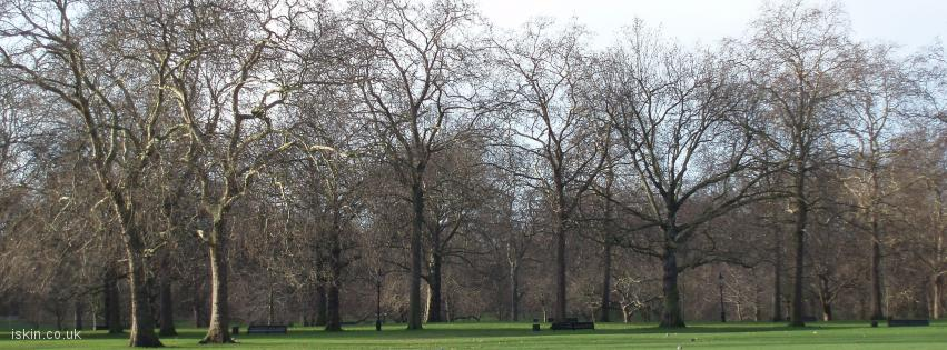 facebook header Trees in the Park