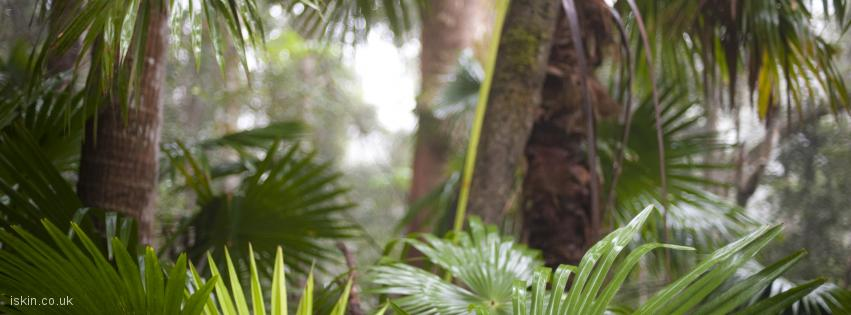 facebook header tropical rainforest