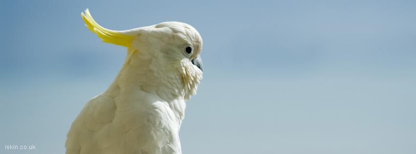 facebook header white cockatoo