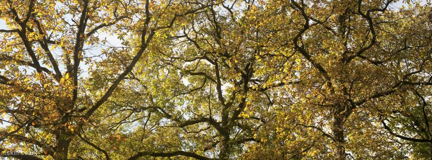 facebook header three autumn trees