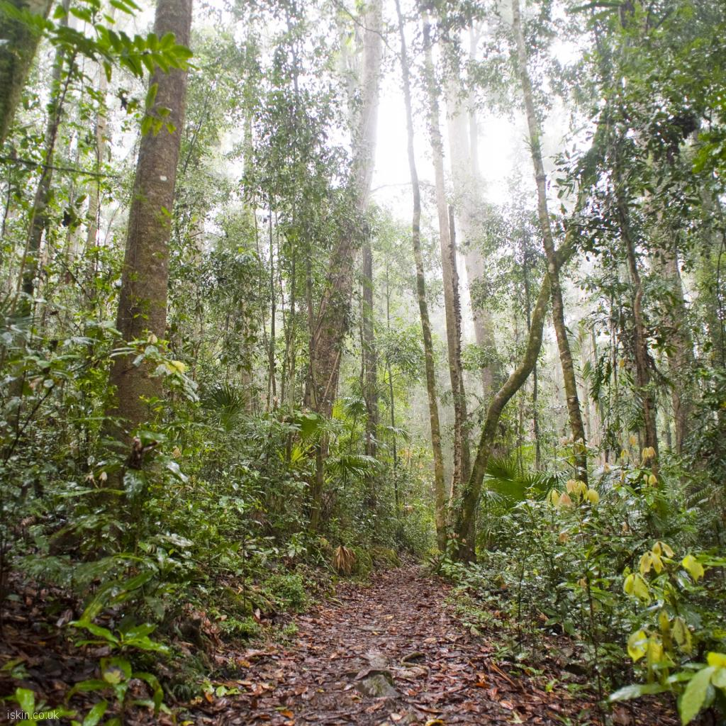ipad wallpaper rainforest footpath