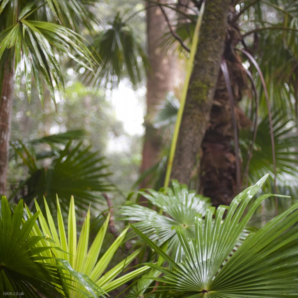 ipad wallpaper tropical rainforest