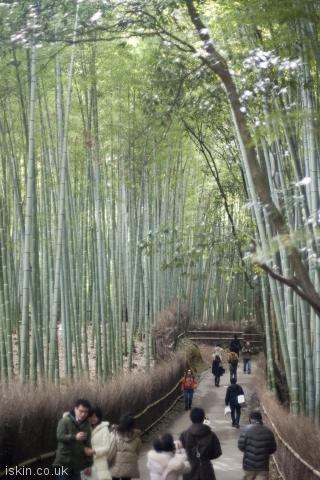 iphone portrait wallpaper bamboo grove