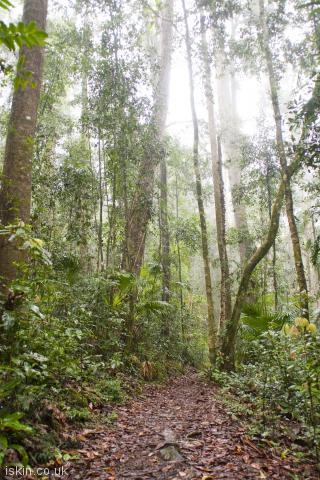 iphone portrait wallpaper rainforest footpath