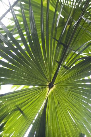 iphone portrait wallpaper rainforest palms