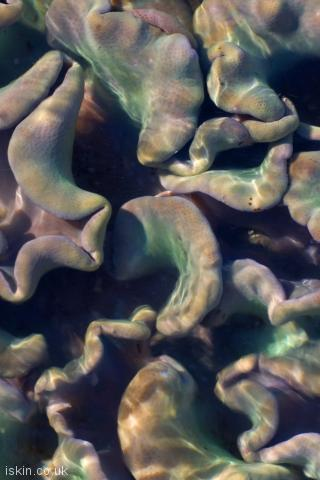 iphone portrait wallpaper Colorful Soft Corals