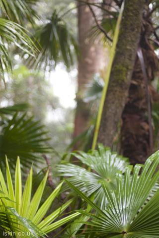 iphone portrait wallpaper tropical rainforest