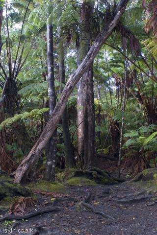 iphone portrait wallpaper Hawaiian Tropical Rainforest