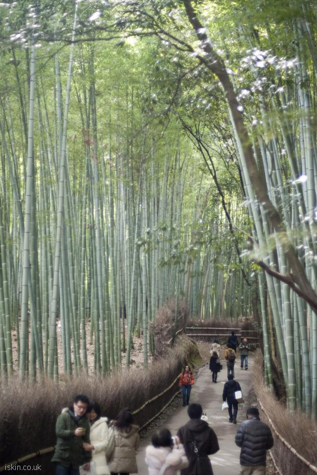iphone 4 portrait wallpaper bamboo grove