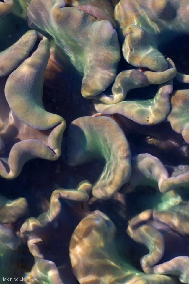 iphone 4 portrait wallpaper Colorful Soft Corals