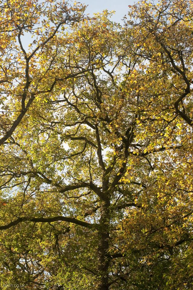 iphone 4 portrait wallpaper three autumn trees
