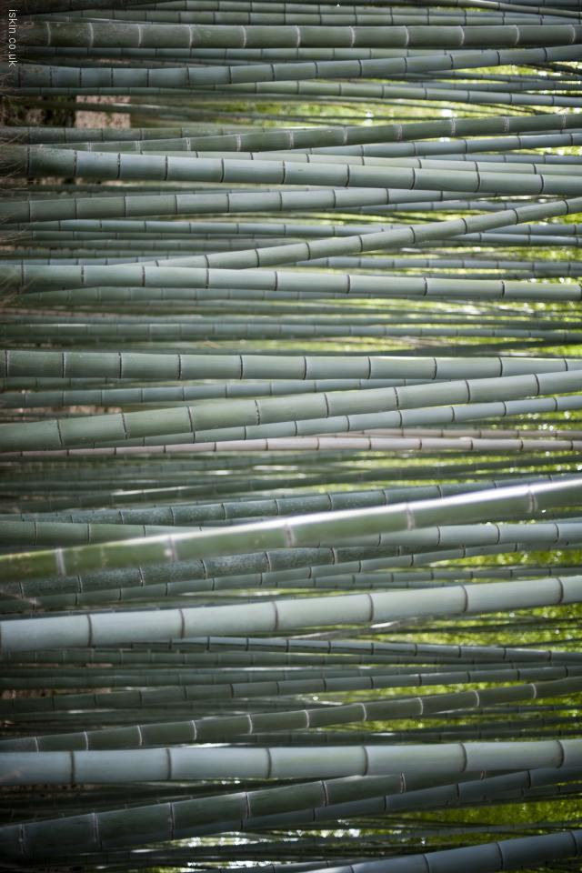 iphone 4 landscape wallpaper bamboo forest