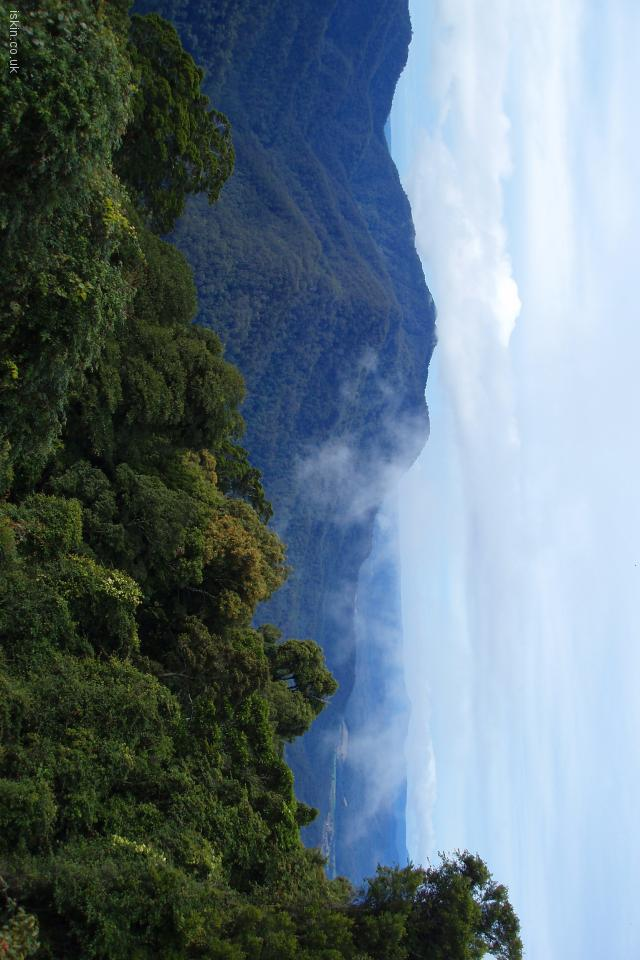 iphone 4 landscape wallpaper Dorrigo Rainforest