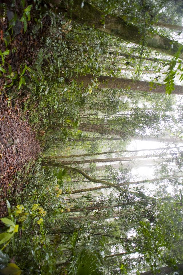 iphone 4 landscape wallpaper rainforest footpath