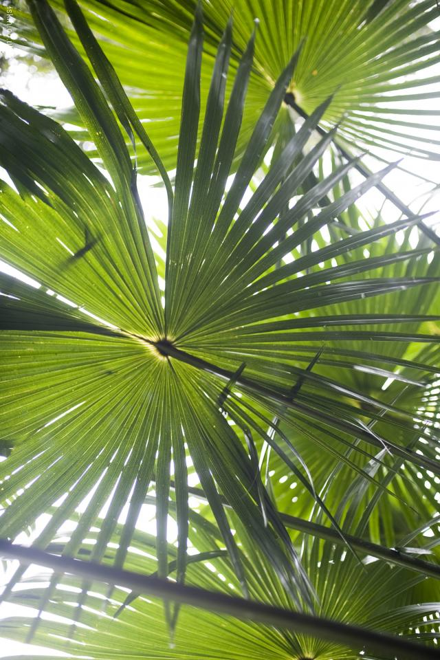iphone 4 landscape wallpaper rainforest palms
