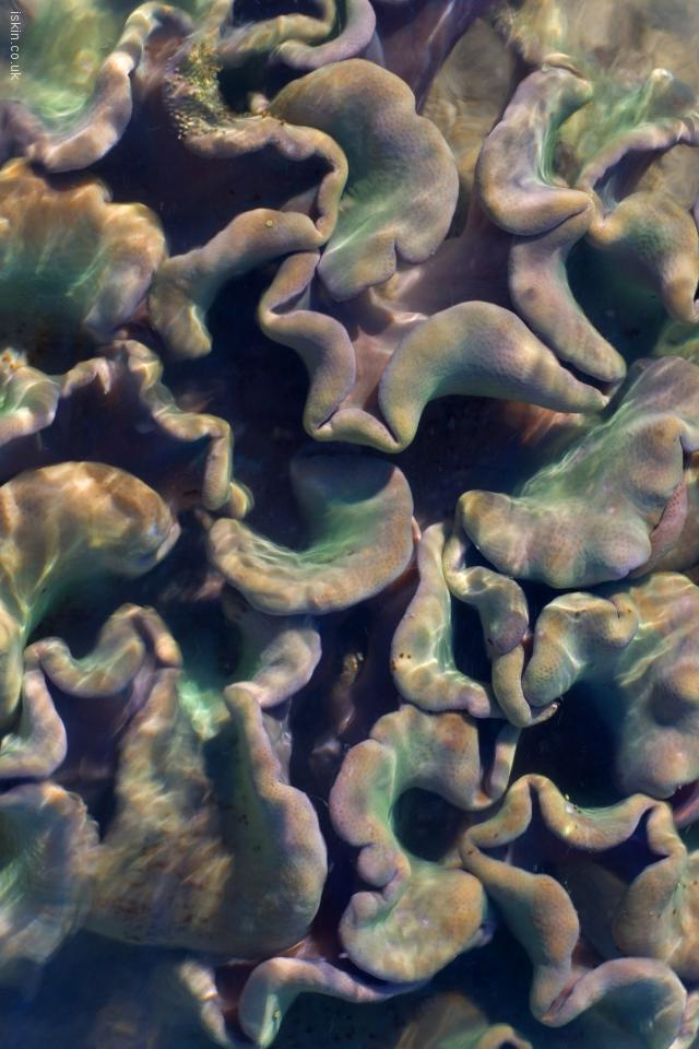 iphone 4 landscape wallpaper Colorful Soft Corals